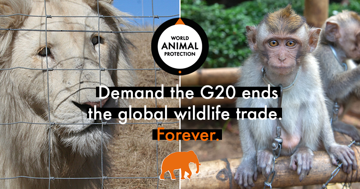 Petition: End the global wildlife trade. Forever.